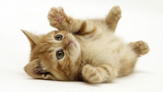 gambar_kucing_comel