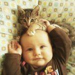 Sistem tandas terbaik untuk kucing