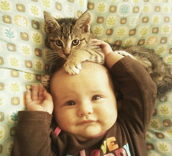 kucing-comel-dengan-baby