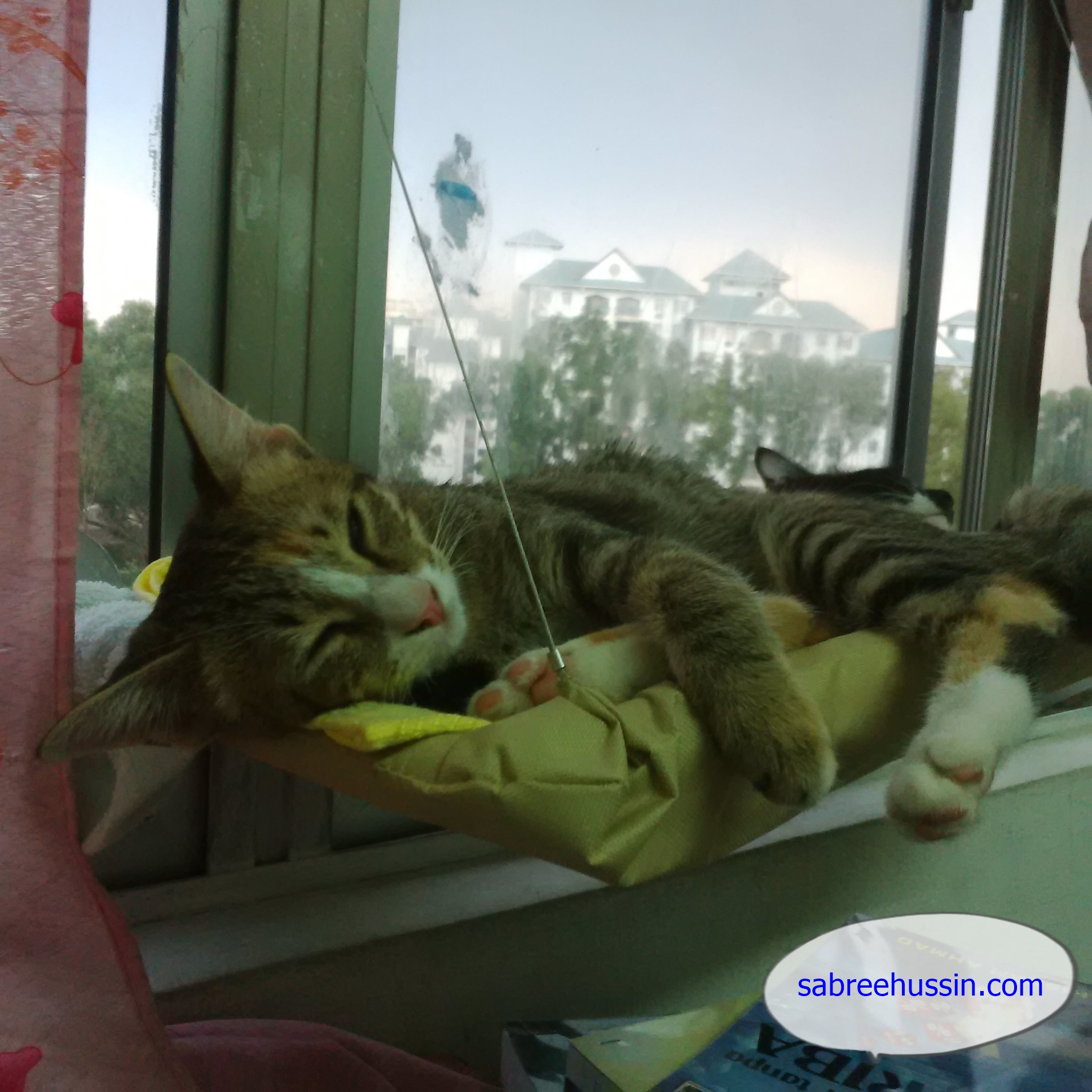 kucing-yang-comel-tidur
