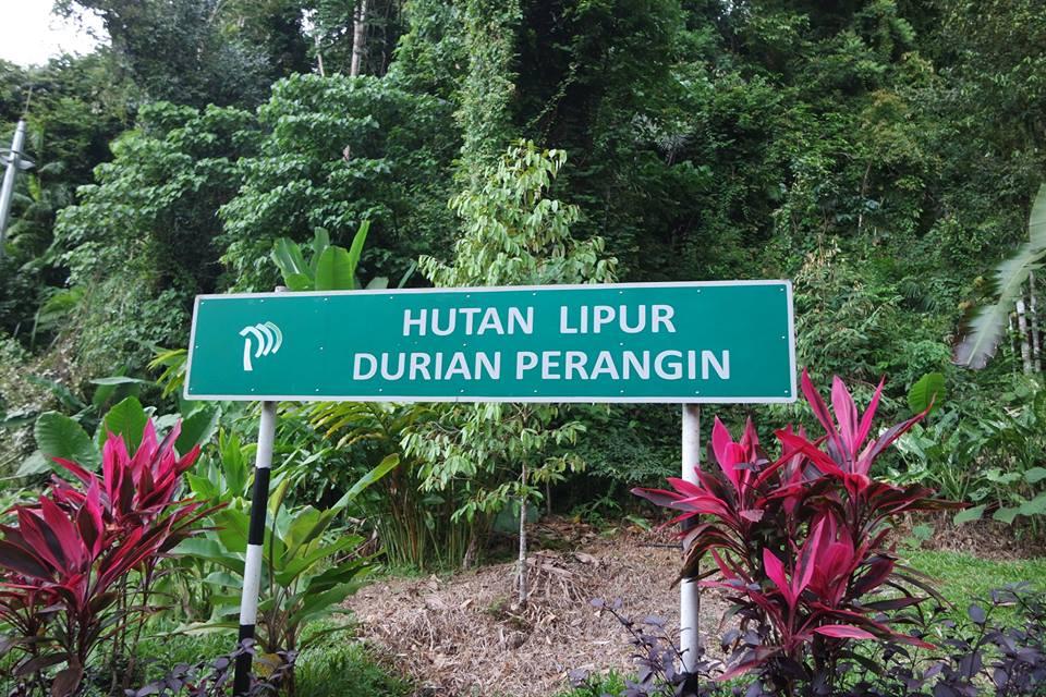 kawasan-rekreasi-hutan-lipur-durian-perangin