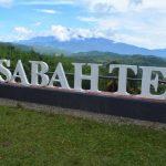 Pengalaman percutian di Sabah (8) – Lawatan ke Sabah Tea dan hari terakhir di Kundasang