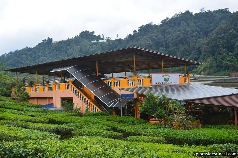 cameron-valley-tea