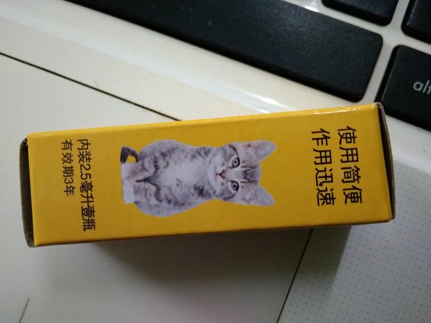 masalah-kutu-kucing